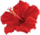 hibiscus-cutout-cover