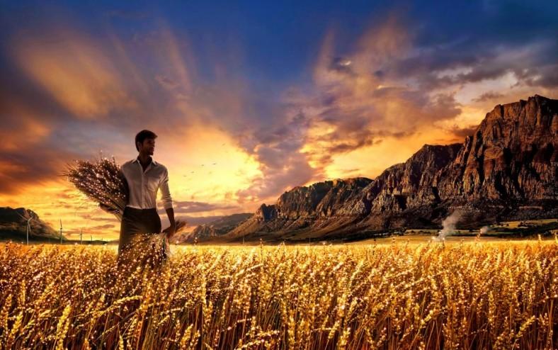 harvest-1140x716