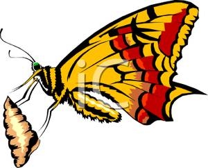cacoon chrysalis-clipart-A_Butterfly_Spinning_a_Cocoon_Royalty_Free_Clipart_Picture_100411-020301-718053
